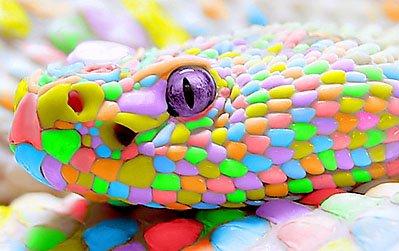 candy_snake_by_kenzeec-d3hron4.jpg