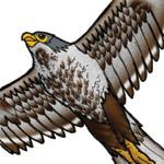 animal_Hawk.jpg